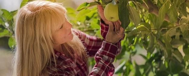 cougar française qui cueille une pomme