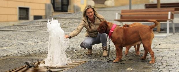 femme française promenant son chien